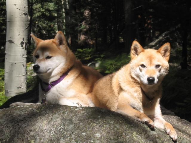 Lilly & Rusty